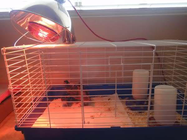 Raising Urban Chickens And What You Need To Know Artzycreations Com